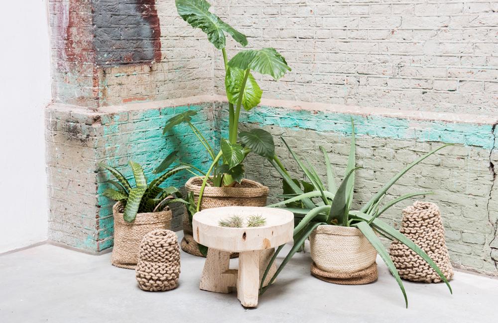 noesis-boutique-decoration-urban-nature-culture